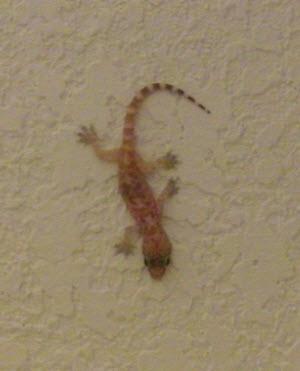 Hotel Lizard